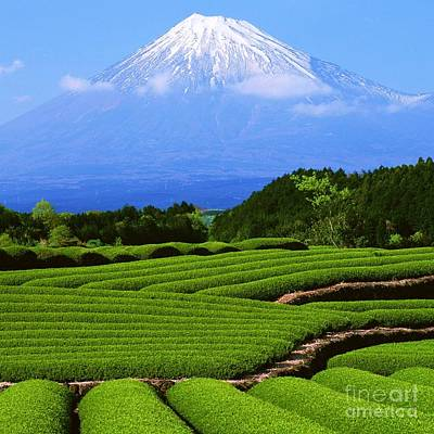 Photograph - Mount Fuji by Roberto Prusso