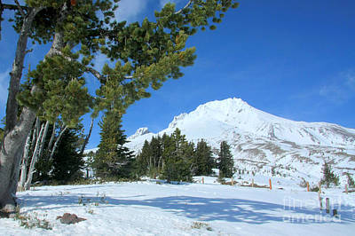 Photograph - Mount Hood by Frank Townsley