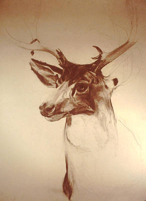 Visionary Art Drawing - Deer Mount by Jeremy Johnson