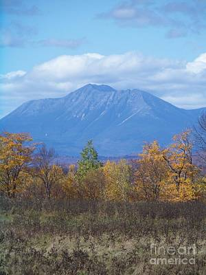 Amy Hamilton Animal Collage - Mount Katahdin from Stacyville 2 by Joseph Marquis