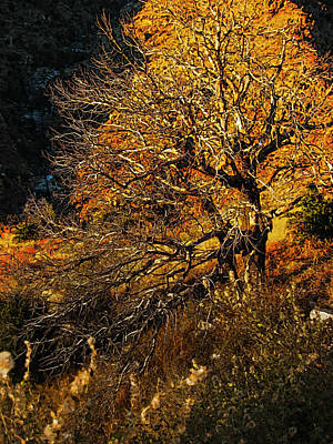 Mountains Painting - Mount Lemmon Burning Bush by John Haldane