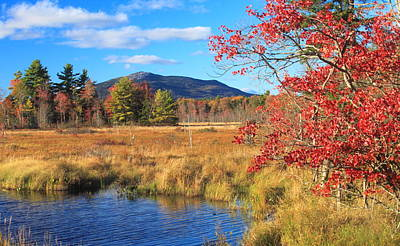 Red Roses - Mount Monadnock Autumn from Scott Brook by John Burk