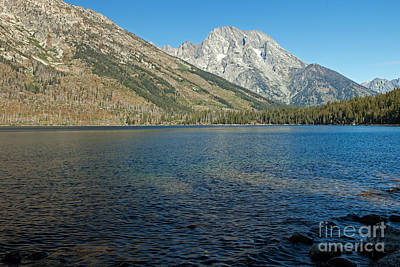 Photograph - Mount Moran Jenny Lake Grand Teton National Park by Fred Stearns