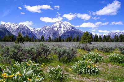 Photograph - Mount Moran Wildflowers by Brian Harig