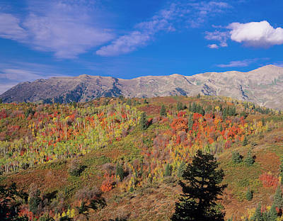 Mount Nebo Photograph - Mount Nebo Fall, Mount Nebo Scenic by Howie Garber