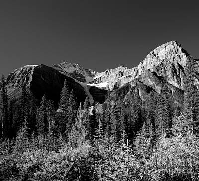 Photograph - Mount Patterson In Fall Monochrome by Terry Elniski