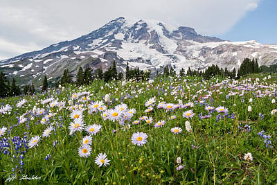 Mount Rainier And A Meadow Of Aster Art Print