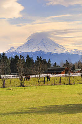 Photograph - Mount Rainier And Grazing Horses by Gary Silverstein