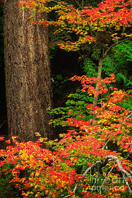 Mount Rainier Fall Foliage Art Print