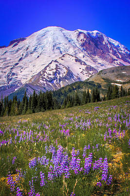 Photograph - Mount Rainier Ix by David Patterson