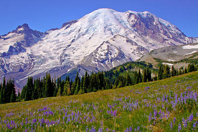 Photograph - Mount Rainier Vi by David Patterson