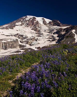 Nature Inspired Photograph - Mount Rainier Wildflower Meadows by Mike Reid