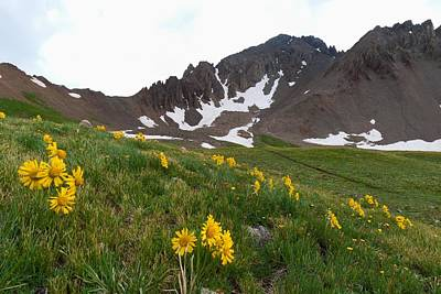 Photograph - Mount Sneffels With Alpine Sunflower by Cascade Colors