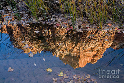 Photograph - Mount Spry Reflection by Fred Stearns