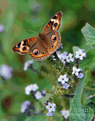 Photograph - Mount Vernon Butterfly by Larry Oskin
