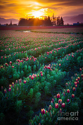 Spring Bulbs Photograph - Mount Vernon Morning by Inge Johnsson
