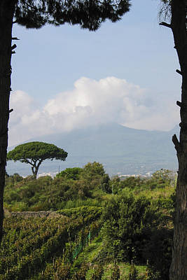 Vineyard Photograph - Mount Vesuvius by Adam Romanowicz