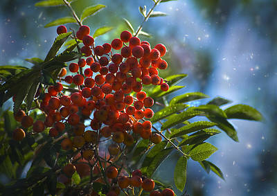 Photograph - Mountain Ash by Yulia Kazansky