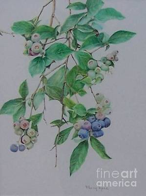 Art Print featuring the drawing Mountain Blueberries by Mary Lynne Powers
