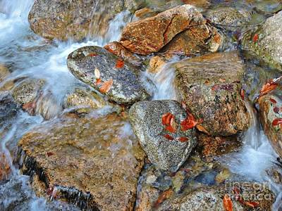 Photograph - Mountain Creek by Marcia Lee Jones
