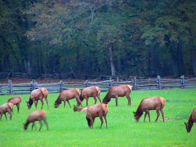 Laurel Ridge Farm Photograph - Mountain Farm Elk by Kathy Long