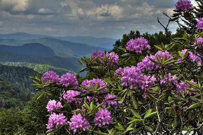 Photograph - Mountain Flowers by Coby Cooper