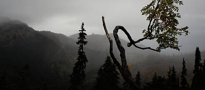 Photograph - Mountain Fog by Lynn Wohlers