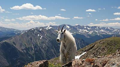 Mountain Goat Photograph - Mountain Goat Trail Blazer by Michael J Bauer