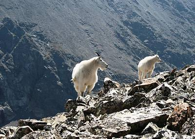 Photograph - Mountain Goats 1 by Nina Donner
