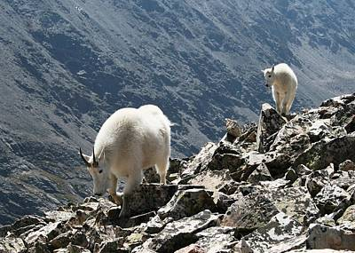 Photograph - Mountain Goats 2 by Nina Donner