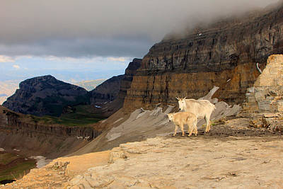Photograph - Mountain Goats On Timpanogos by Johnny Adolphson