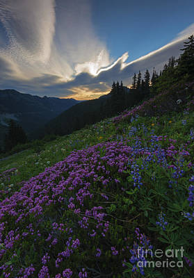 Heather Wall Art - Photograph - Mountain Heather Dawn by Mike  Dawson