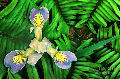 Photograph - Mountain Iris And Ferns by Dave Welling