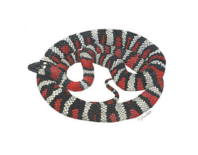 Painting - Mountain King Snake by Cindy Hitchcock
