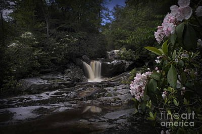 Mountain Laurel And Falls On Small Stream Art Print by Dan Friend