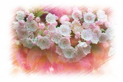 Mountain Laurel Flowers Art Print by Dan Friend