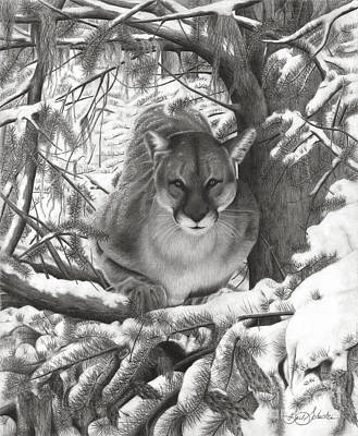 Drawing - Mountain Lion Hideout by Barb Schacher