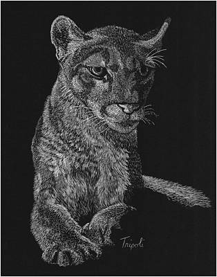 Drawing - Mountain Lion by Lawrence Tripoli