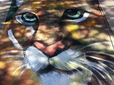 Pastel - Mountain Lion by Marisa Salazar