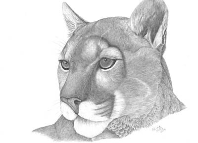 Drawing - Mountain Lion by Patricia Hiltz