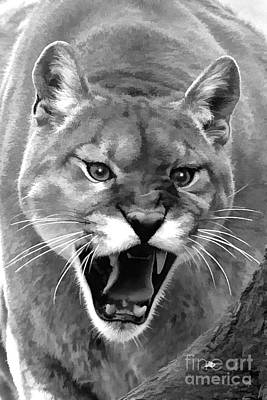 Photograph - Mountain Lion Roaring by Dan Friend