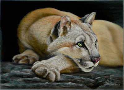 Painting - Mountain Lion by Sam Davis Johnson