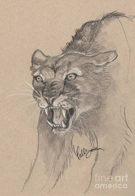 Mountain Lion Sketch Art Print by Callie Smith