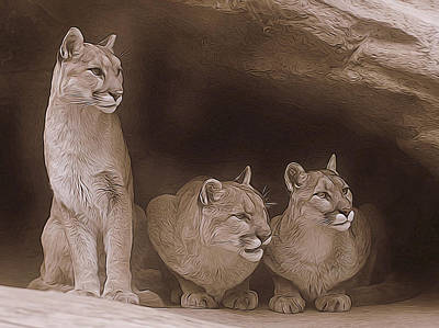 Mountain Lion Trio On Alert Art Print