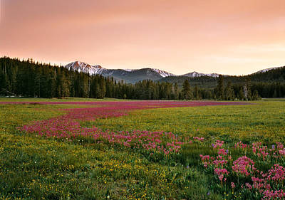 Shooting Star Photograph - Mountain Meadow Color by Leland D Howard