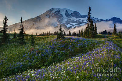 Washington Nationals Photograph - Mountain Meadow Serenity by Mike Reid