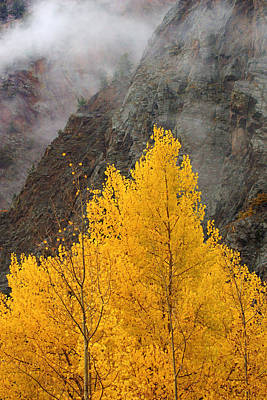 Photograph - Mountain Mist Over Autumn Leaves by Daniel Woodrum