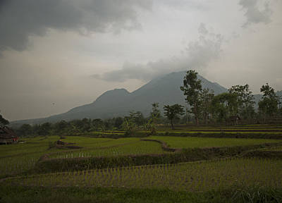 Photograph - Mountain Rice Fields by Miguel Winterpacht