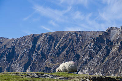Slieve League Photograph - Mountain Sheep Grazing - Donegal Ireland by Bill Cannon
