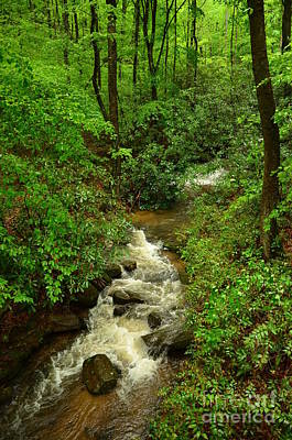 Photograph - Mountain Stream by Bob Sample